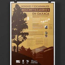cartel cultural en Oaxaca